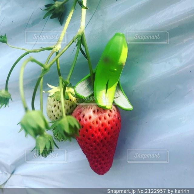 花のクローズアップの写真・画像素材[2122957]