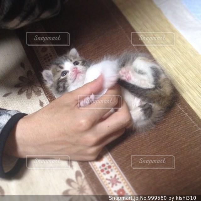 猫を持っている人の写真・画像素材[999560]