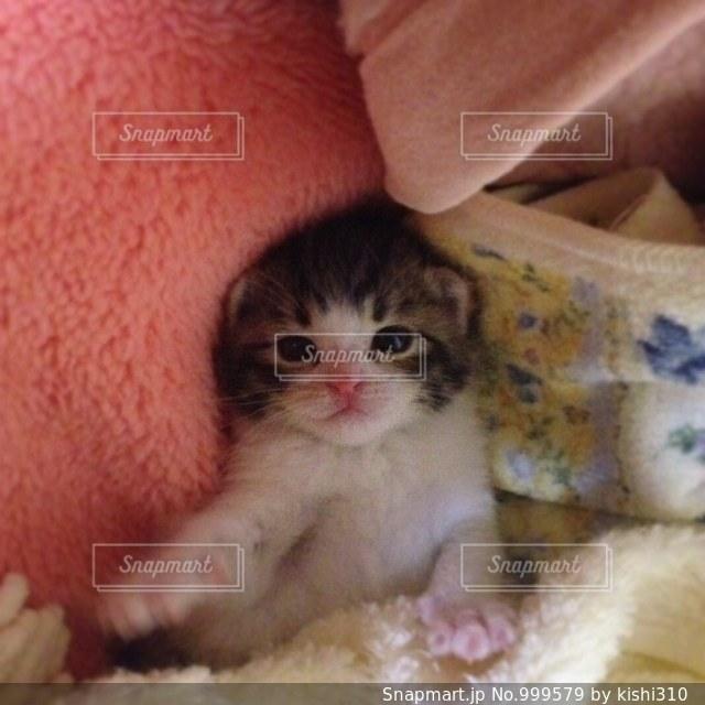 毛布の上に座っている猫 - No.999579