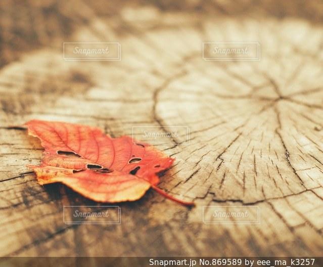 秋の落ち葉🍂の写真・画像素材[869589]