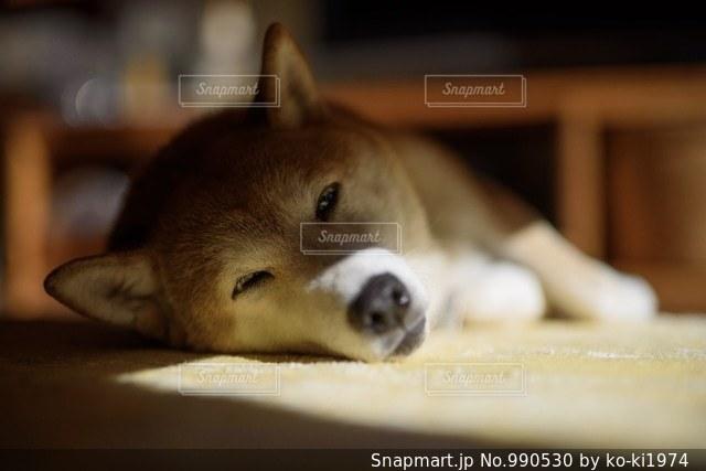 お昼寝の写真・画像素材[990530]