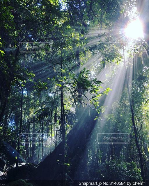 森の眺めの写真・画像素材[3140584]