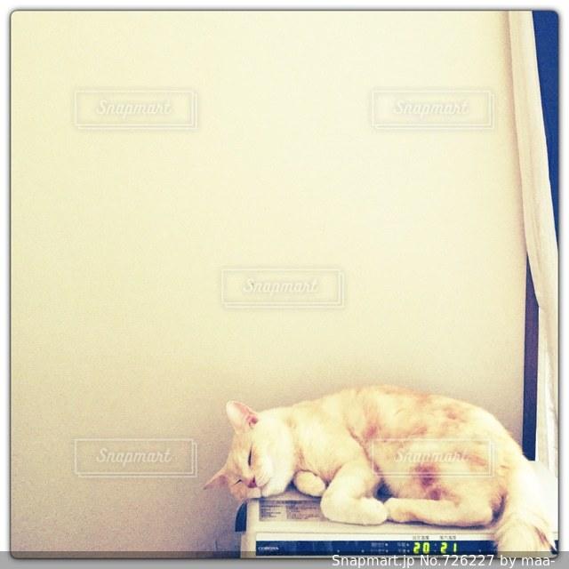 ストーブと猫の写真・画像素材[726227]