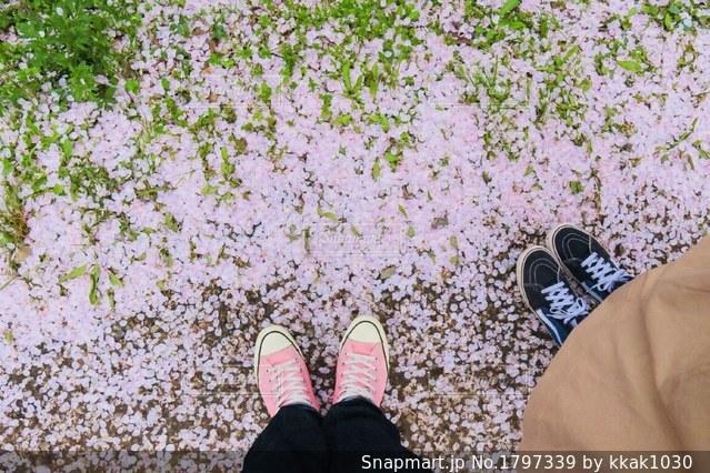 桜道の写真・画像素材[1797339]