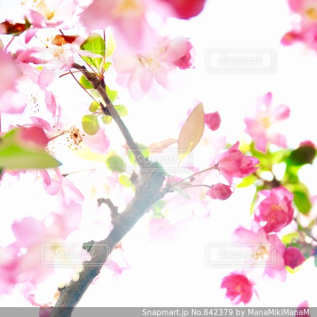春 - No.842379