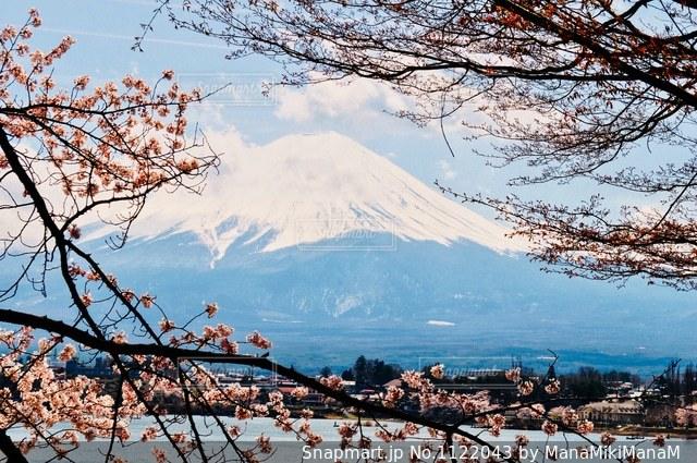 春の富士の写真・画像素材[1122043]
