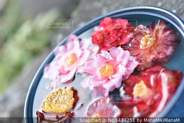 近くに食べ物のプレートのアップの写真・画像素材[1434251]