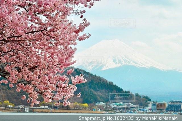 背景の山と木の写真・画像素材[1832435]