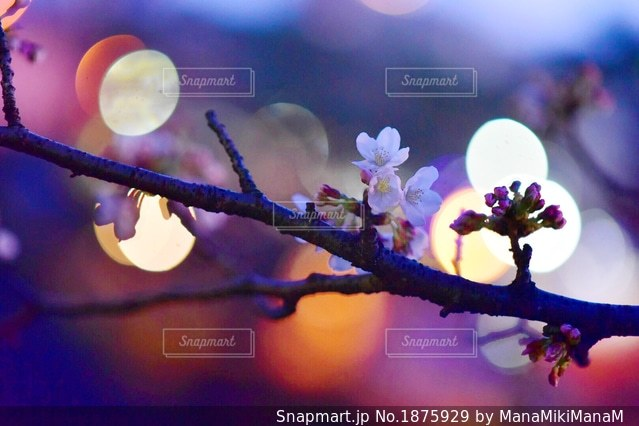 近くの花のアップの写真・画像素材[1875929]