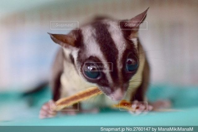 動物の写真・画像素材[2760147]