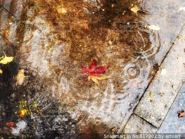 ある秋の雨の日の写真・画像素材[817902]