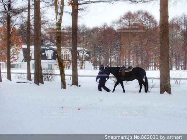 雪の中で馬をひく男性の写真・画像素材[882011]