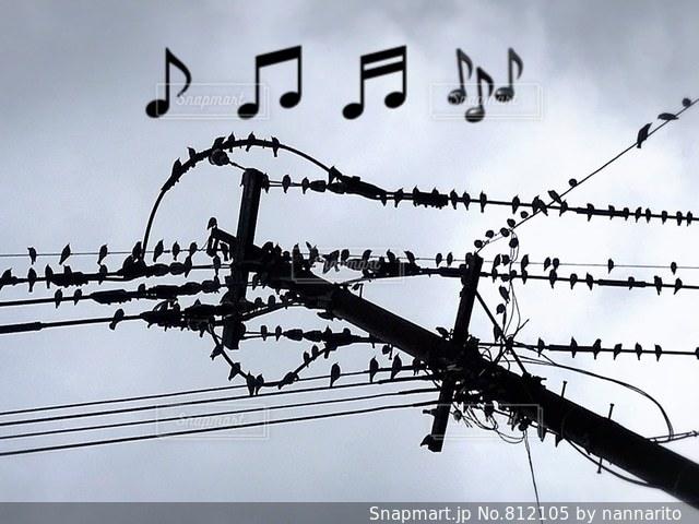 小鳥の歌が聞こえくるよ〜🎶って、もんじゃない!の写真・画像素材[812105]