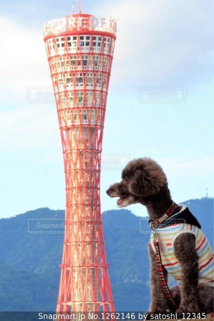 塔の前に立っている男の写真・画像素材[1262146]