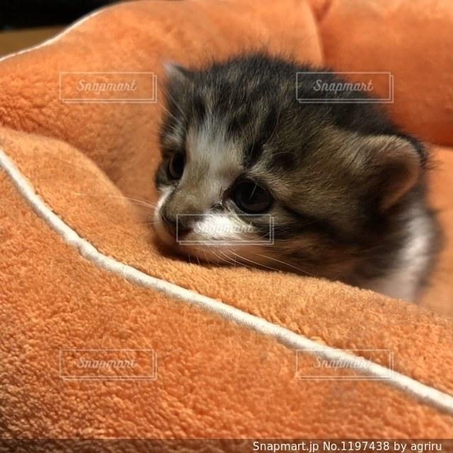 猫のアップの写真・画像素材[1197438]