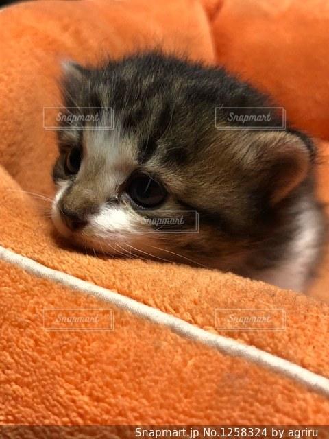 猫のアップの写真・画像素材[1258324]
