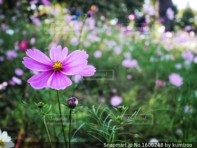近くの花のアップの写真・画像素材[1600248]