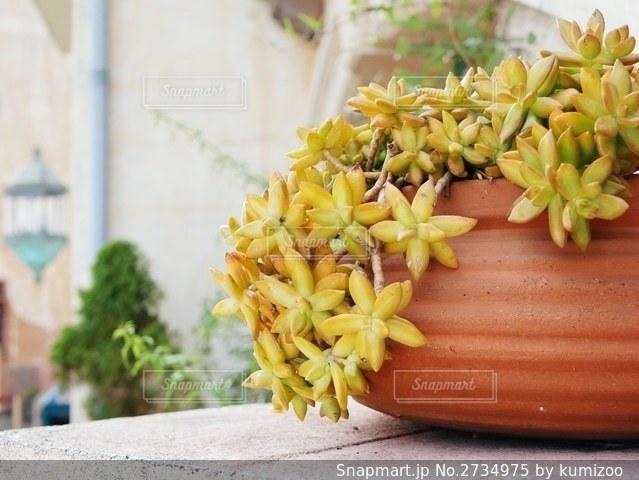 観葉植物の写真・画像素材[2734975]