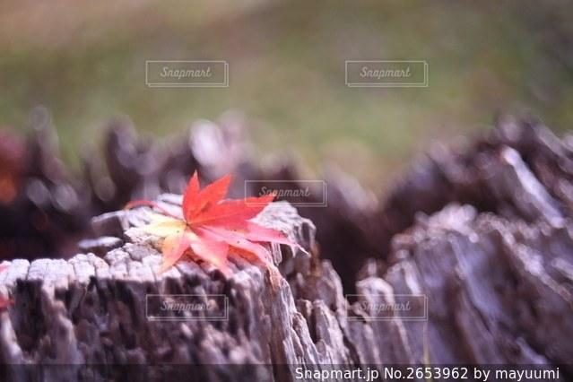 自然の写真・画像素材[2653962]