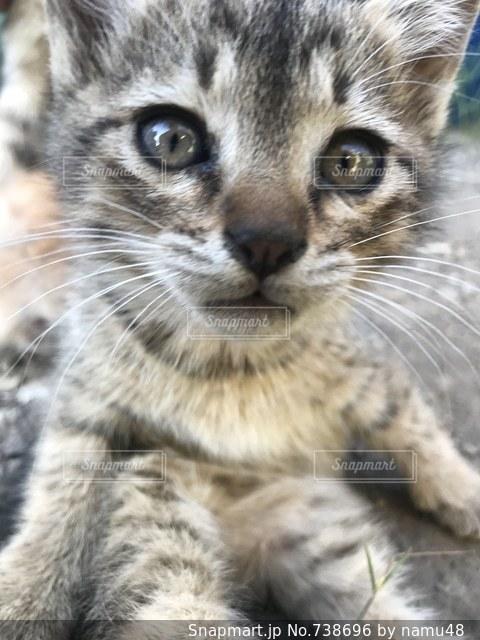近くに猫のアップの写真・画像素材[738696]