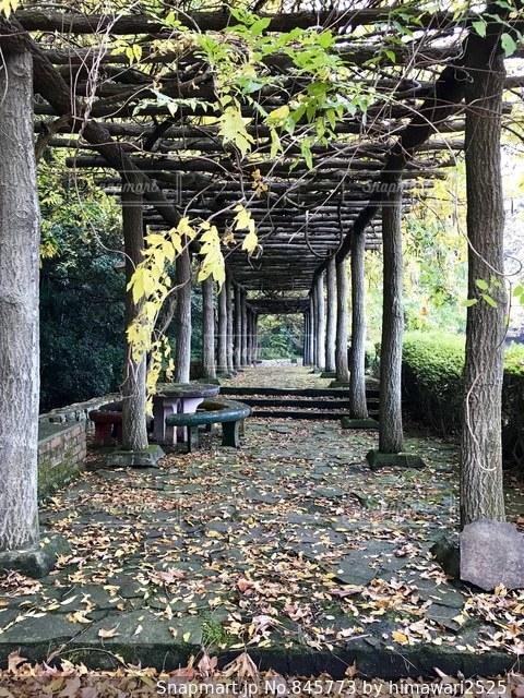樹木のトンネル🌿🍁🍂🍃の写真・画像素材[845773]