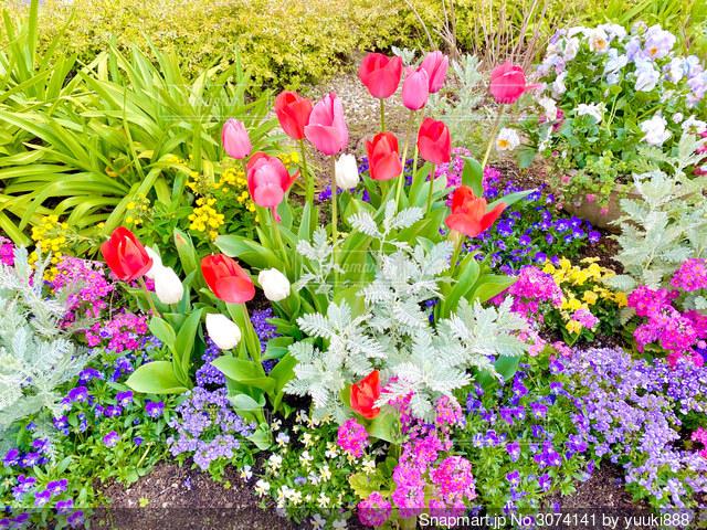 花の写真・画像素材[3074141]