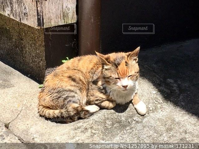 歩道の上に横たわる猫の写真・画像素材[1257095]