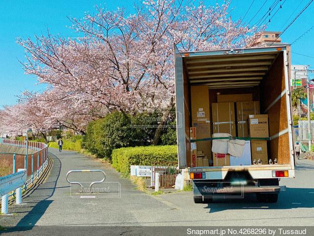 桜並木と引っ越しトラックの写真・画像素材[4268296]