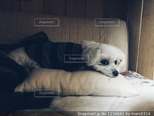 ベッドの上に座っている犬の写真・画像素材[1234041]