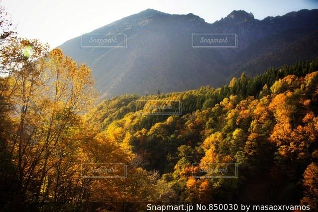 背景の山と木の写真・画像素材[850030]