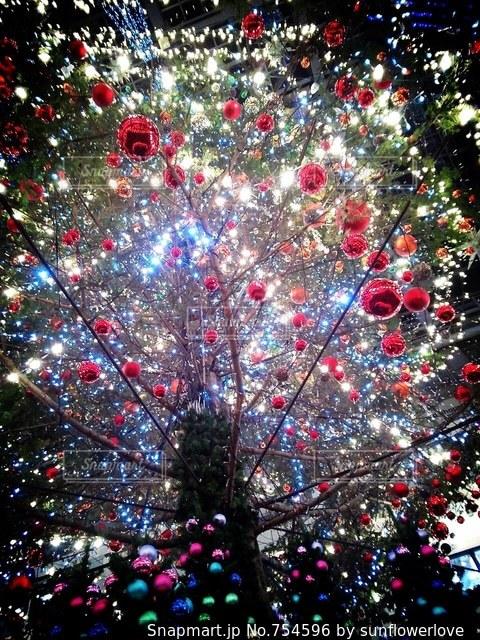 クリスマス ツリーの写真・画像素材[754596]