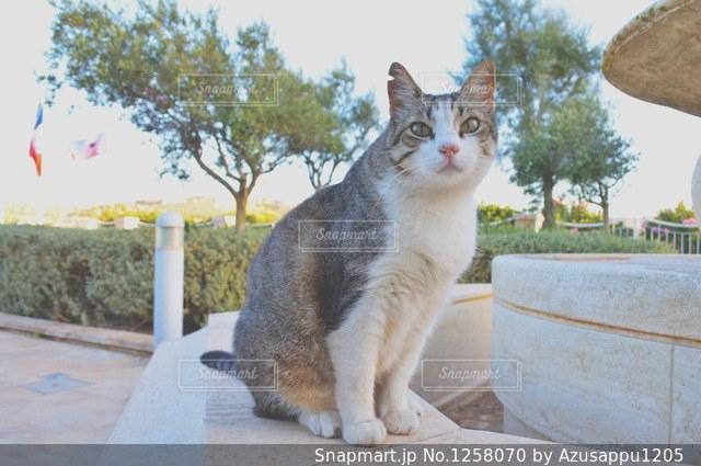 棚の上に座って猫の写真・画像素材[1258070]