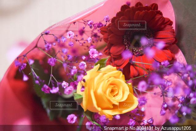 花のクローズアップの写真・画像素材[3084131]