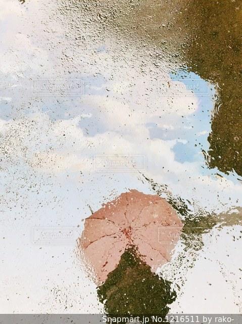 可愛いピンク傘(*^ω^*)の写真・画像素材[1216511]