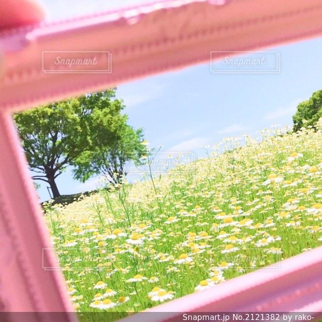 可愛いお花畑の写真・画像素材[2121382]