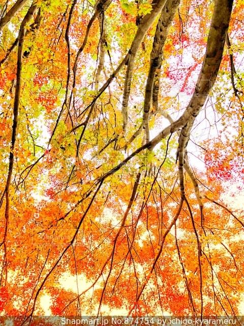城址公園の紅葉を見上げての写真・画像素材[874754]