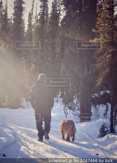 アラスカの山の雪道を犬と歩く男性の写真・画像素材[2747466]