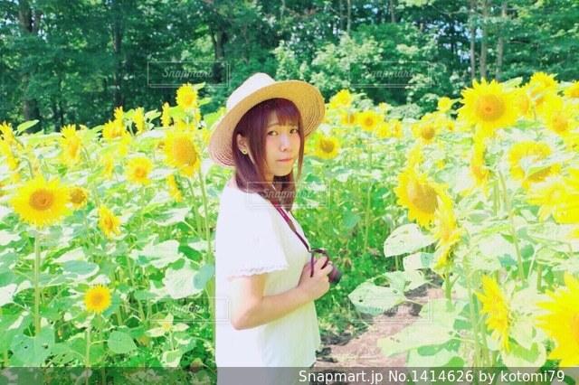 ひまわり畑の写真・画像素材[1414626]