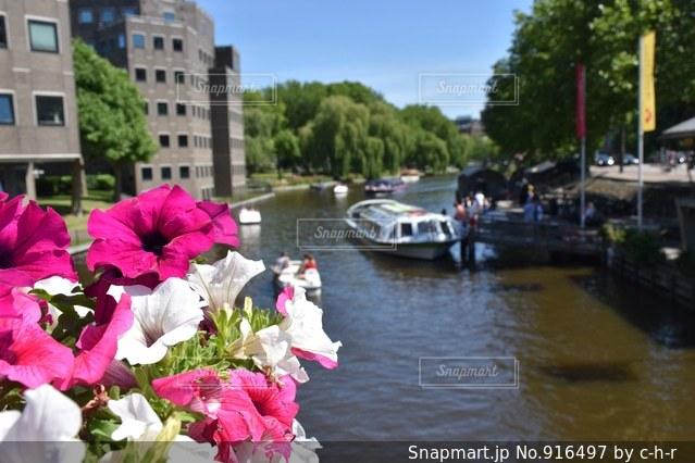 運河と花の写真・画像素材[916497]