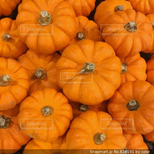 かぼちゃの写真・画像素材[828191]