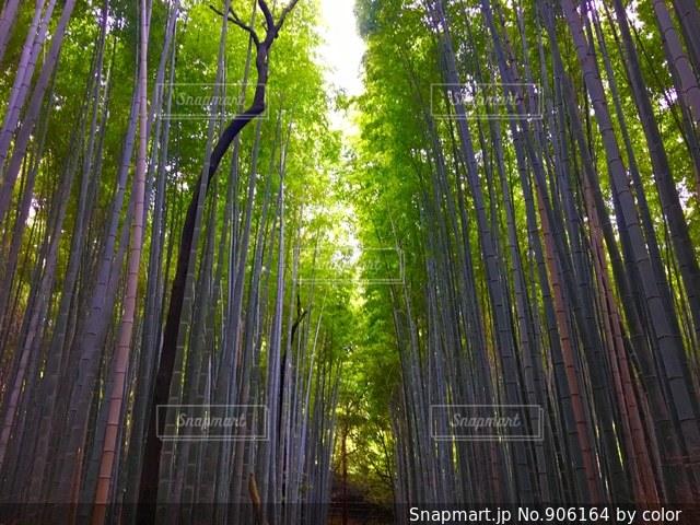近くの木のアップの写真・画像素材[906164]