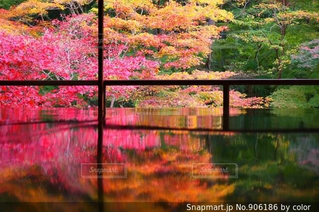 水の体の上の橋の写真・画像素材[906186]