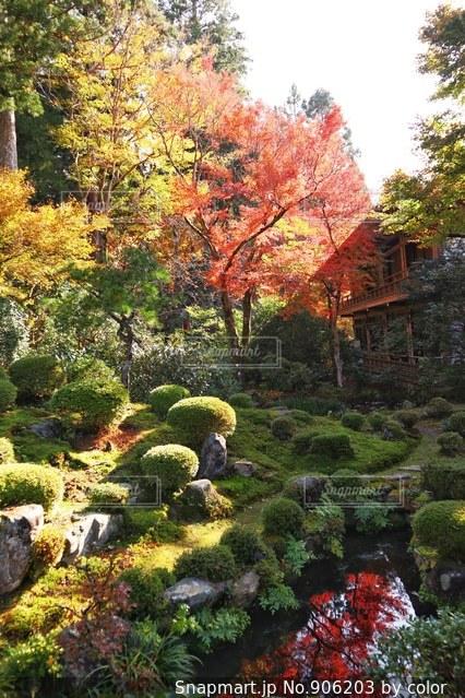 庭の植物の写真・画像素材[906203]
