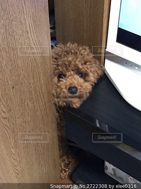 ドアの隙間からのぞく犬の写真・画像素材[2722308]
