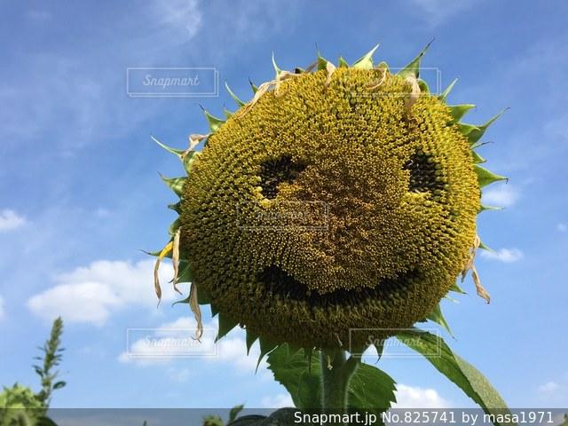 近くの植物のアップの写真・画像素材[825741]