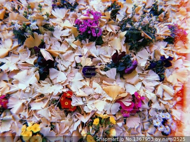 近くの花のアップの写真・画像素材[1367953]