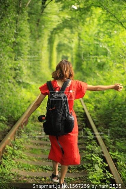 森の横に立っている人の写真・画像素材[1567259]