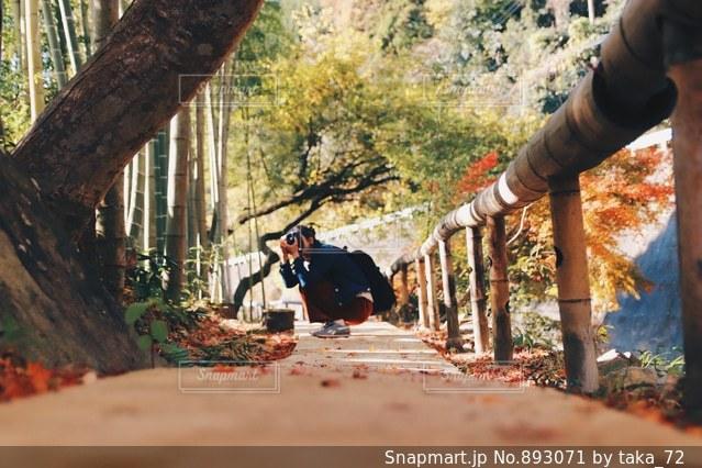 竹撮娘の写真・画像素材[893071]