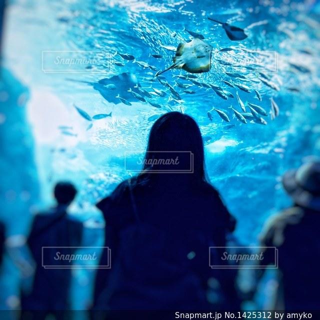江の島水族館の写真・画像素材[1425312]