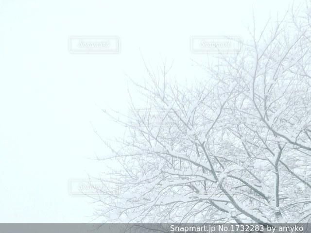 真っ白な空と冬景色の写真・画像素材[1732283]